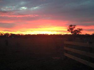 golden plains septics sunset